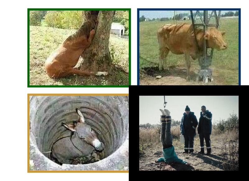 Їх шкода – вони тваринки...