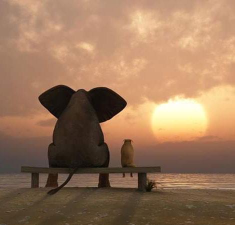 – Слонику, а куди котиться сонце?..